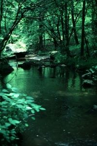 Green water in a creek surrounded by trees